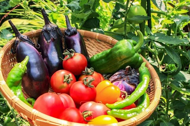 農業株価の特徴『農業業界の株価が上がるポイントは?セクター投資』